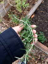 Stopped by around Thanksgiving, to pick up some fresh rosemary.