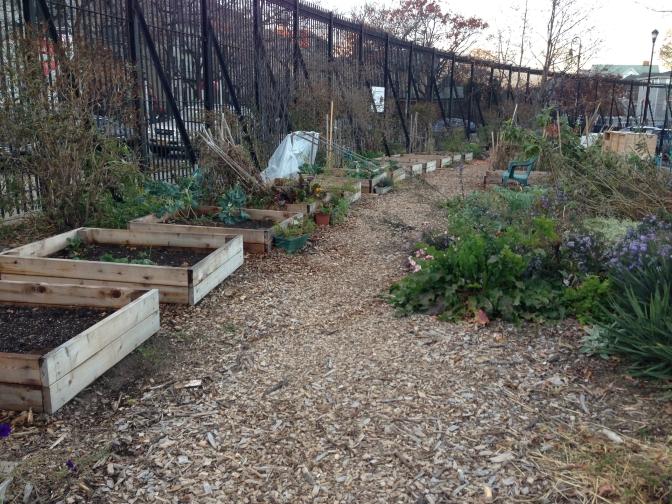 A Gardening Season of Faith's Perfection – Winter Gardening
