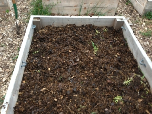 Plot layer of leaves and manure.