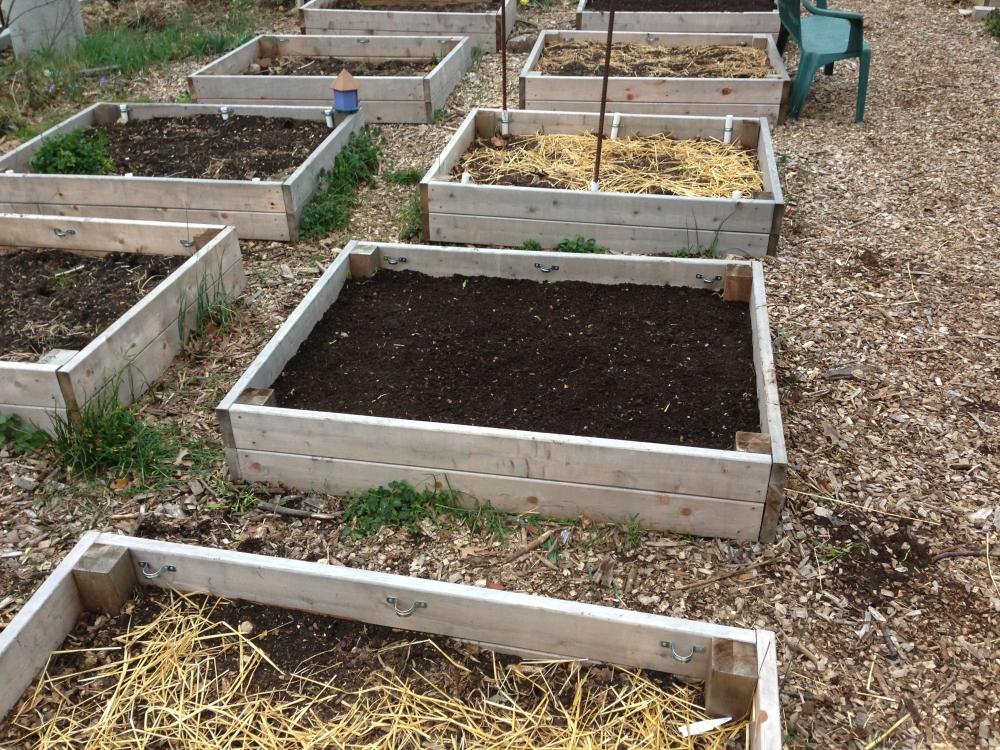 Spring gardening prep